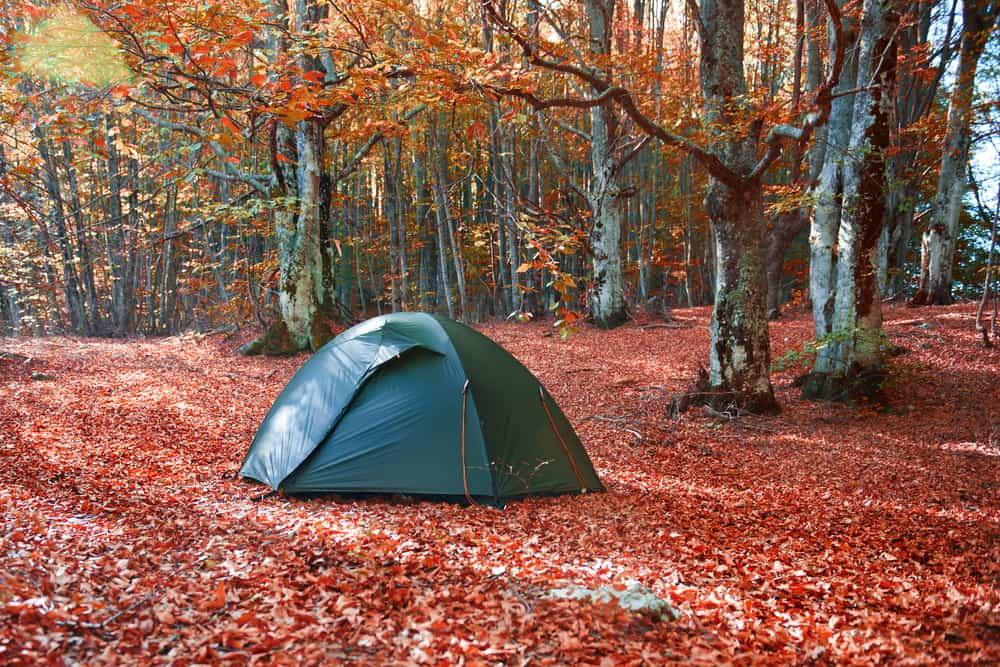 a tent in the middle of a clearing with red leaves scattered all over the ground