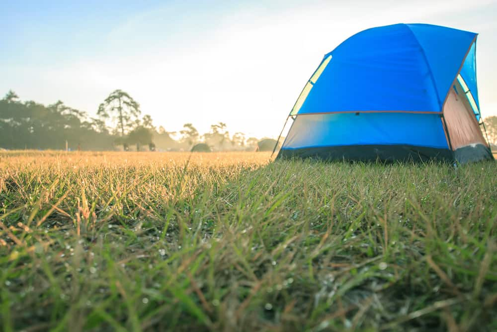 a tent in a grassy clearing